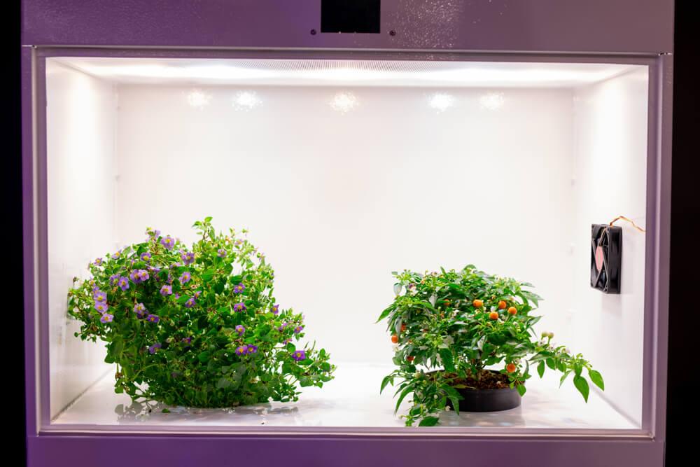 Wentylacja w growboxie